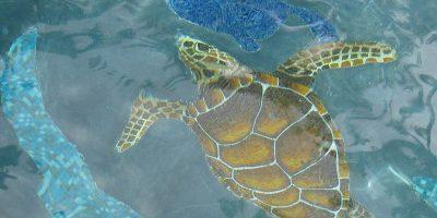 Turtle-web-1024_tp