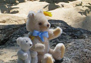 bears-web-1024_tp